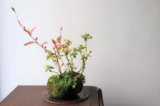 イヌタデの花とノギクの綿毛の山野草盆栽