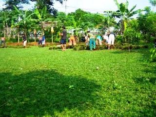 Jual rumput taman hias murah | Gajah mini | swiss | jepang | golf | green | peking | gajah biasa | tukang taman murah | jasa penanaman rumput taman | suplier rumput | petani rumput  taman
