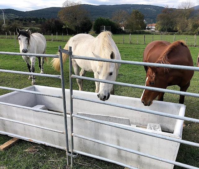 caballos bebedero de hormigón