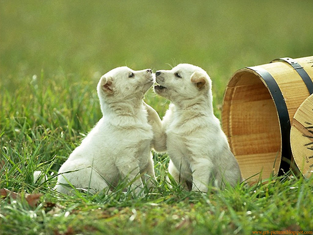 Cute Designs Full Page Wallpapers Hd Wallpapers Cute Puppies