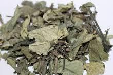 atau yang lebih dikenal dengan nama Keji beling ialah tumbuhan semak yang banyak dima Obat tradisional batu ginjal dari keji beling