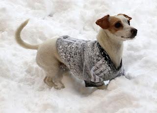 Snowy Thelma