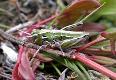 invertebrados de los bosques patagonicos