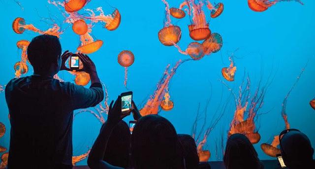 Jellies Tour no Monterey Bay Aquarium na Califórnia