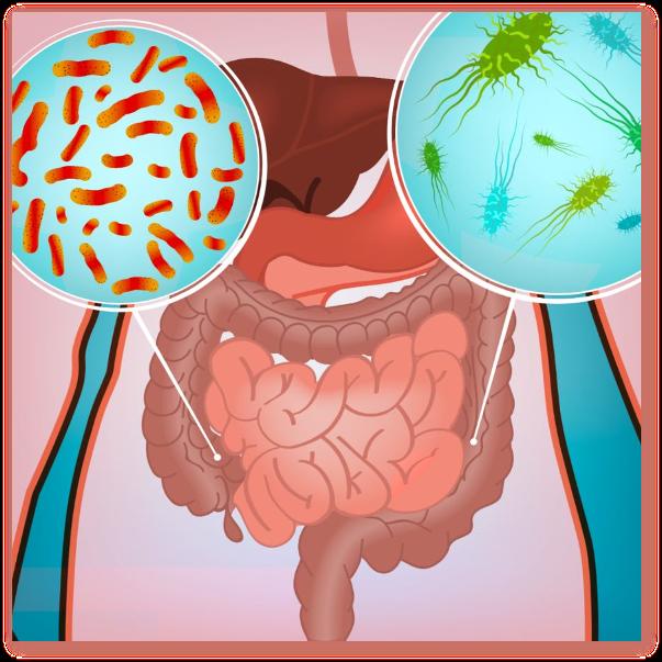 Cum alegem cel mai bun produs pentru refacerea microflorei intestinale