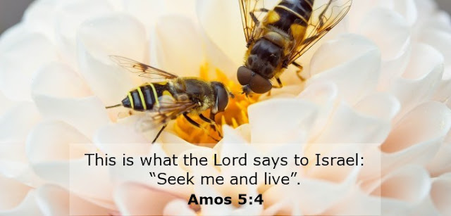 """This is what the Lord says to Israel: """"Seek me and live""""."""