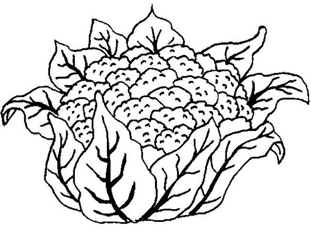 dibujo de una coliflor imprimir