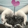 Semear amor para colher vida