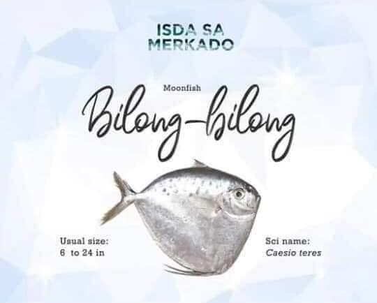 Isdang Bilong-Bilong (Moonfish)