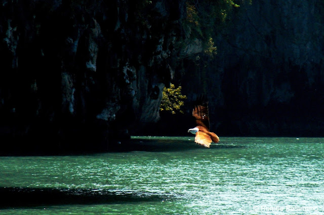 Sea Eagle, Phang Nga Bay, Thailand