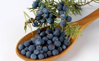 juniper berries dapat menghilangkan kuku kuning