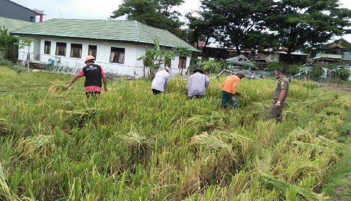 Target Setip Desa Miliki BUMP, Cara Pemkab Sinjai Sejahterakan Petani