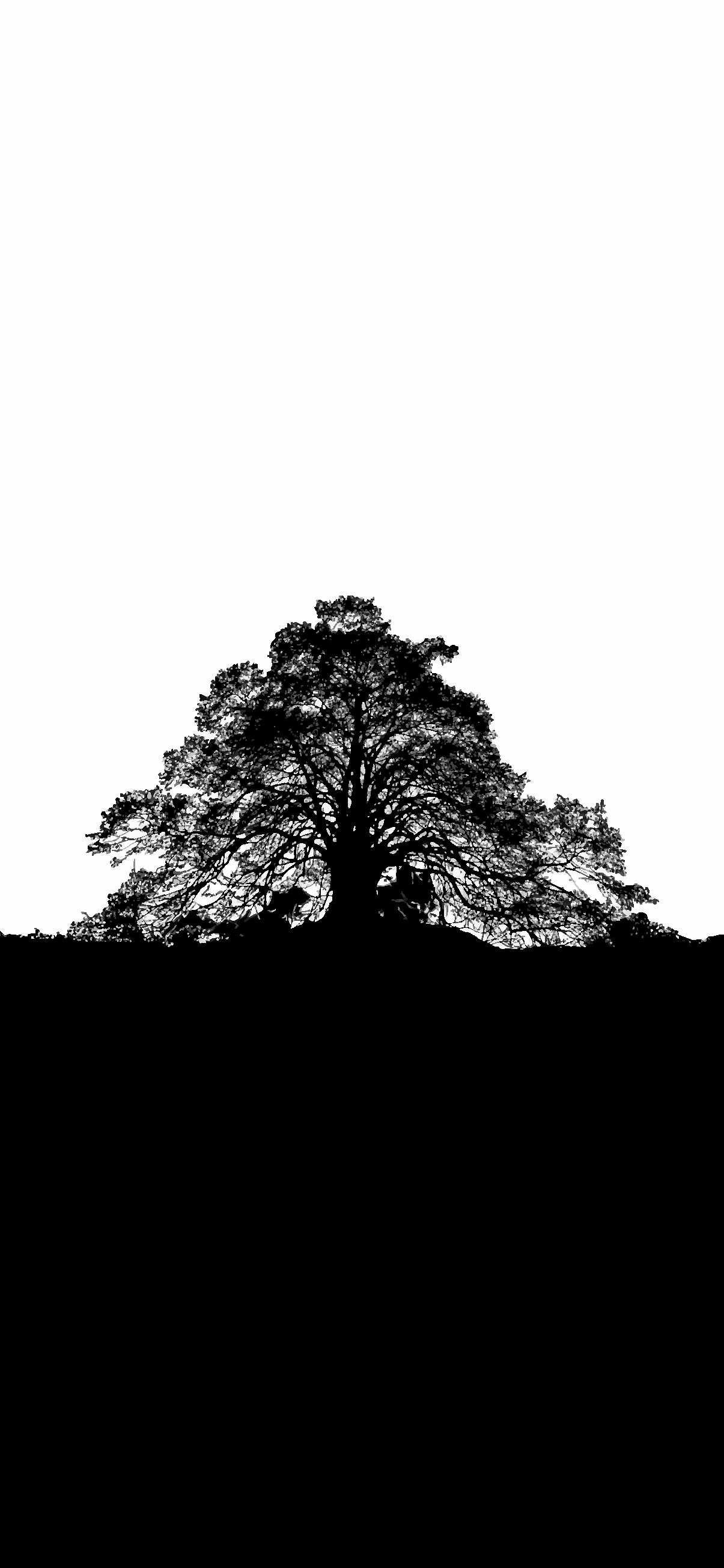 BW TREE WALLPAPER PHONE HD