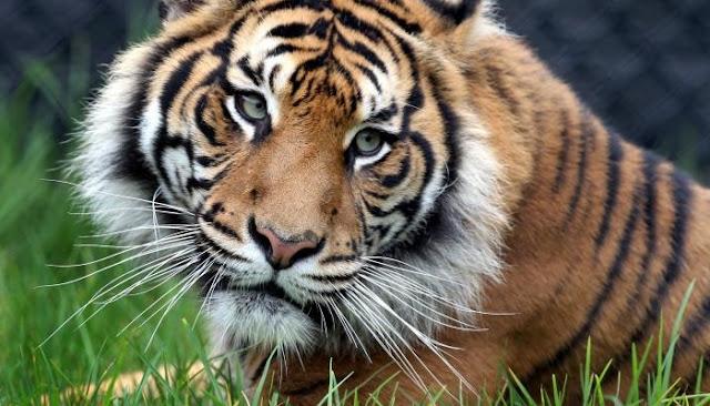 10 Hewan Langka di Indonesia dan Hampir Punah