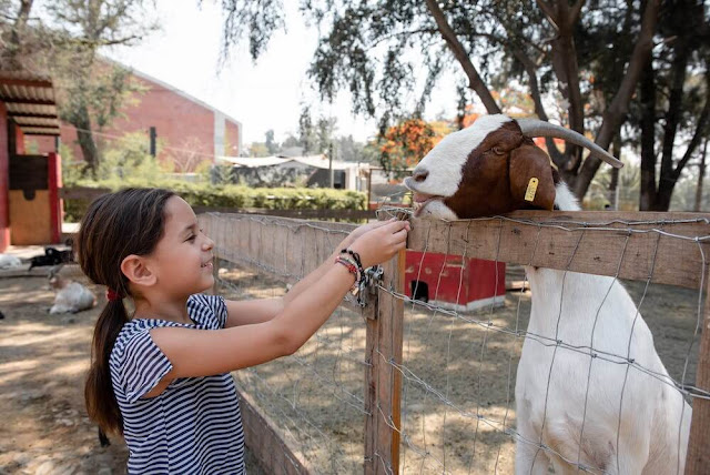 5 Top Tips For Visiting the Zoo With Your Daycare Student
