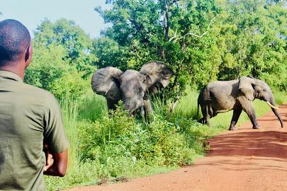 Elephants at Mole National Park, Northern Region