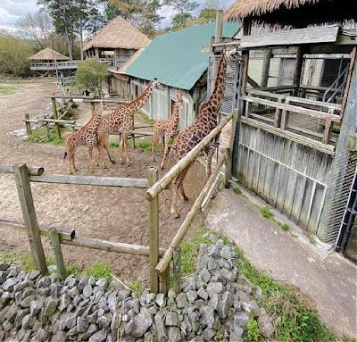 Virginia Zoological Park in Norfolk