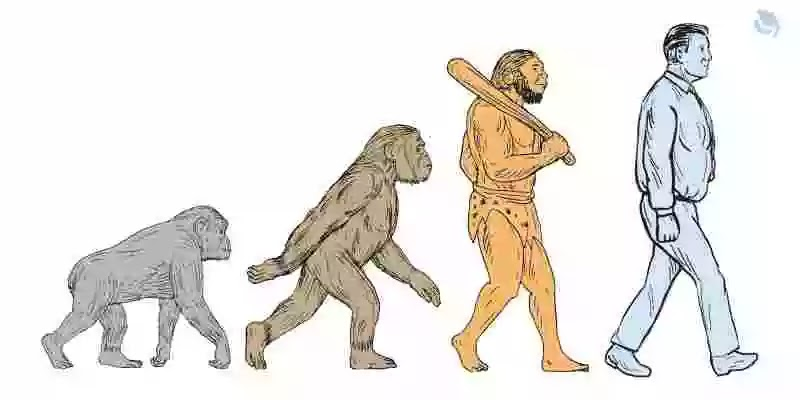 Human Evolution - Facts, History, Stages & Tree