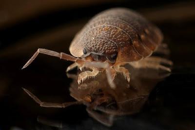 Is a Bug Bite Dangerous?