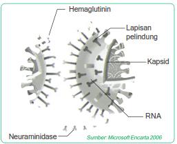 ciri virus,pengertian virus,struktur virus