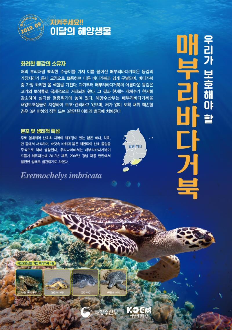 해수부, 2019년 9월의 해양생물로 '매부리바다거북' 선정