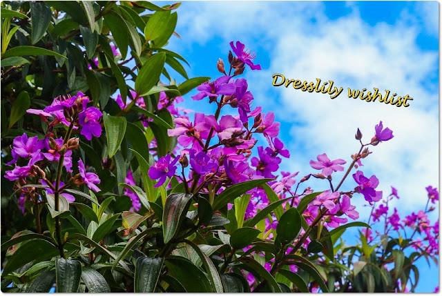 dresslily wishlist, online, onlajn, šoping, shopping, kupovina,