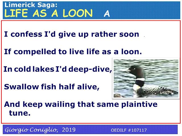 limerick;waterfowl; common loon; Gavia immer; Muskoka; Giorgio Coniglio