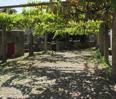 espaço rural com algumas vinhas