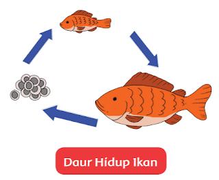 Daur Hidup Ikan www.simplenews.me