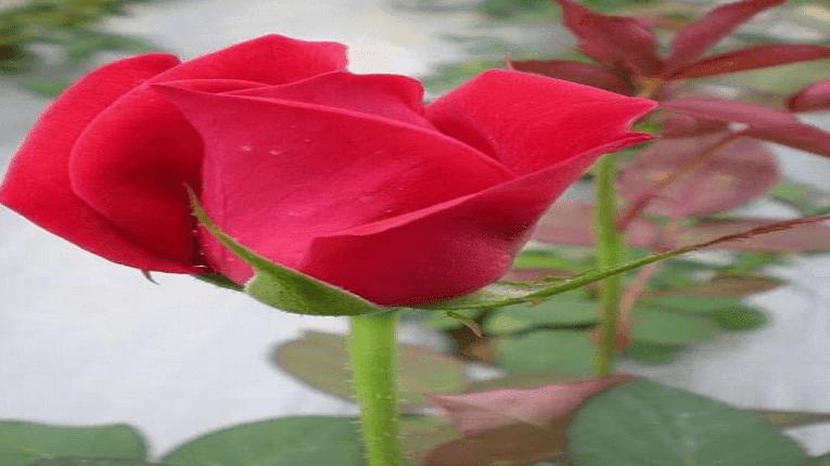 Puisi Seandung Rindu Untukmu Kekasih