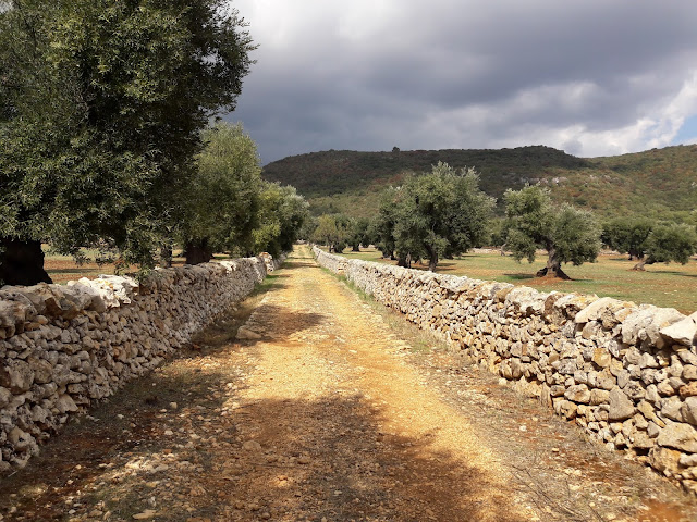 tratturo con muretti a secco e alberi di ulivo
