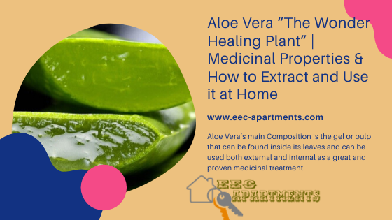 Aloe Vera's main Composition is the gel or pulp that can be found inside its leaves and can be used both external and internal as a great and proven medicinal treatment.