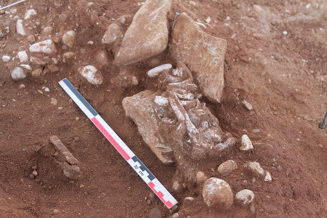 Early Iron Age burials discovered in France