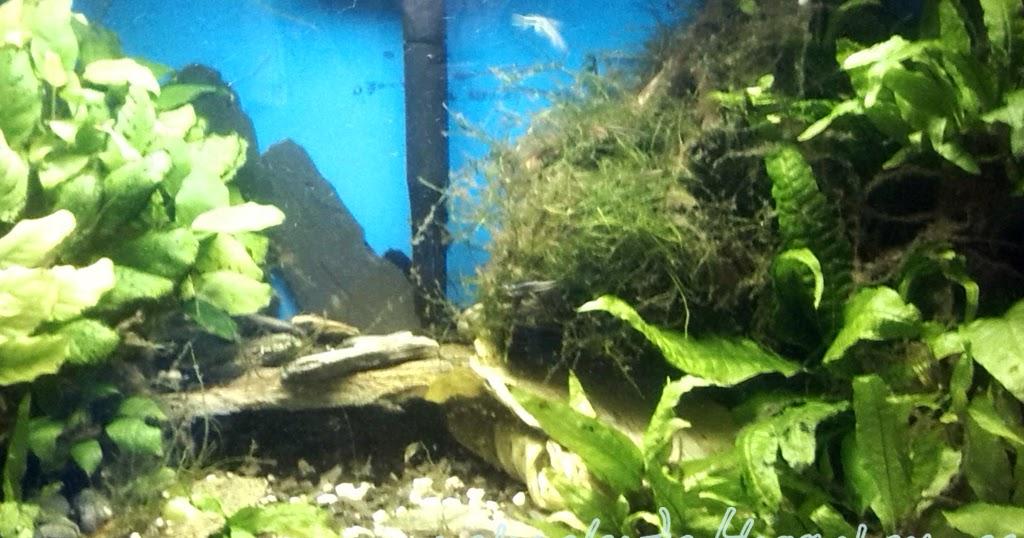 La naturaleza en casa un acuario en casa - Acuario en casa ...