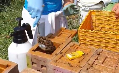 Συνταγή: Μια κουτάλα μέλισσες και μια βασίλισσα...
