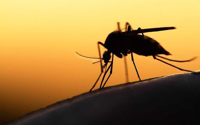 Συναγερμός για τον ιό του Δυτικού Νείλου σε Θράκη και Ροδόπη