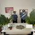 Barletta (Bat). Detenuto agli arresti domiciliari trovato in possesso di sostanza stupefacente. Arrestato dai Carabinieri.