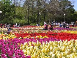 Hình ảnh Vườn Hoa Đà Lạt