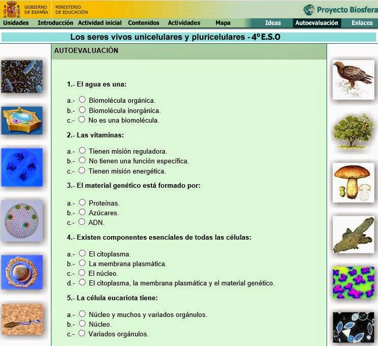http://recursos.cnice.mec.es/biosfera/alumno/4ESO/seruni-pluricelulares/autoevaluacion.htm