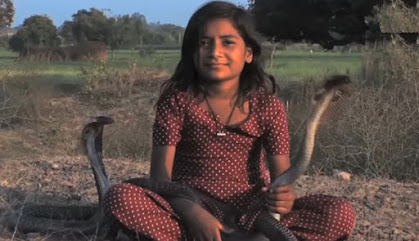 Kajol di gadis penakluk ular berbisa
