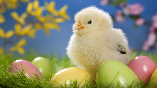 easter popular images