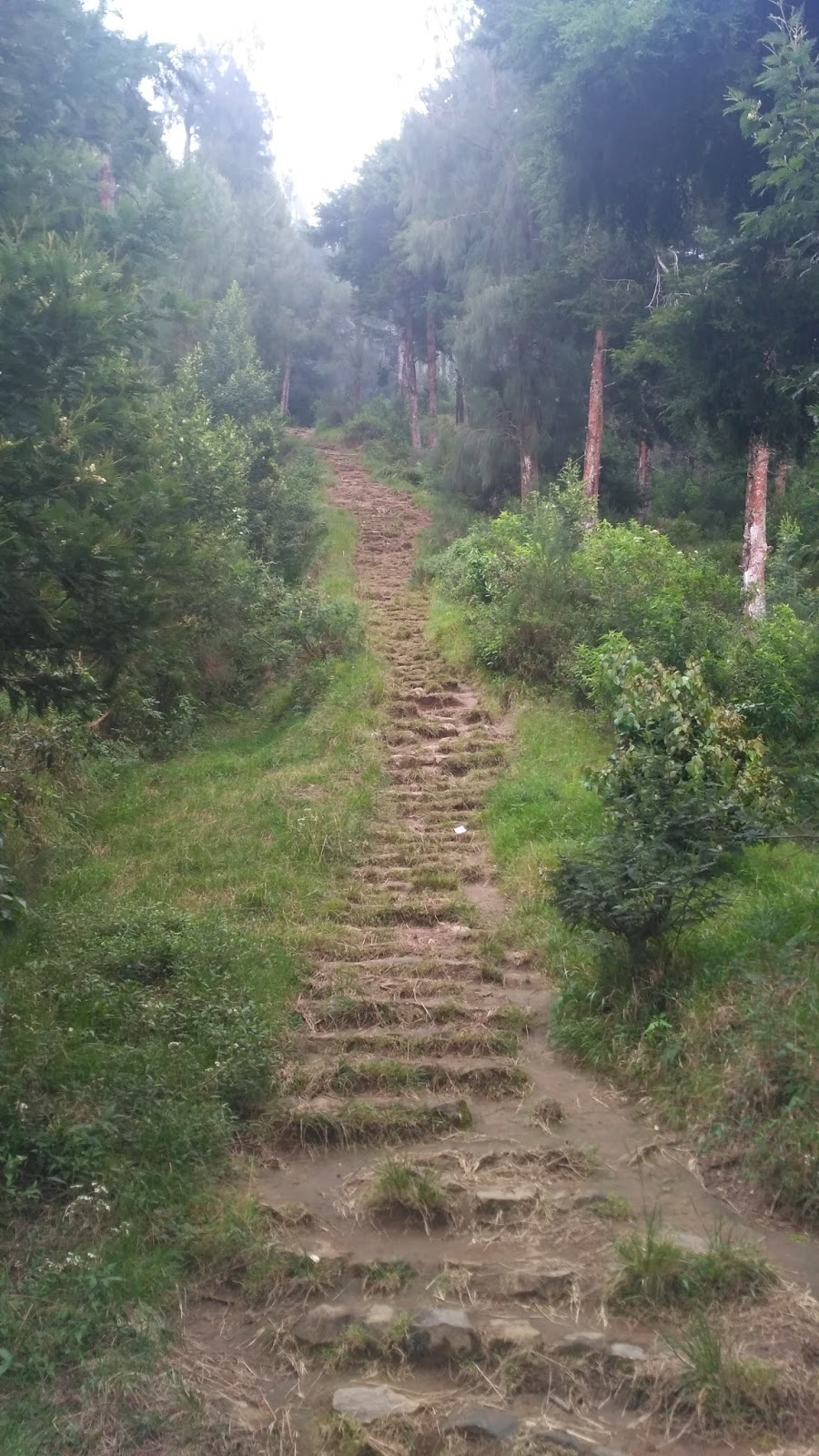 trek tangga sumbing