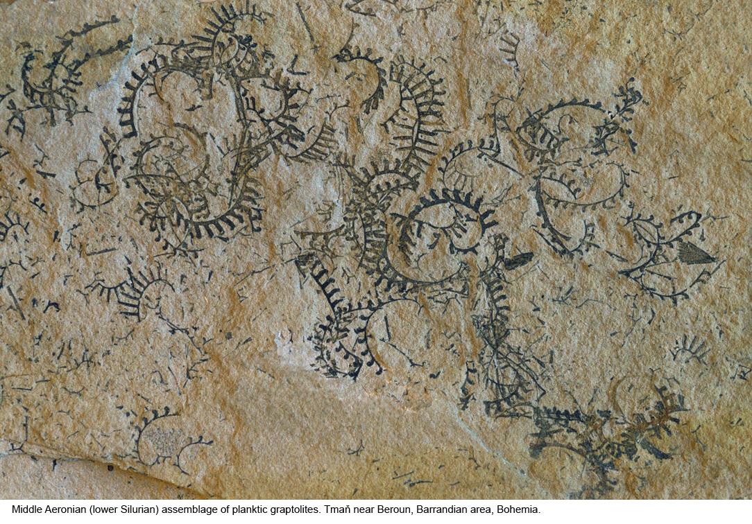 Qual è la differenza tra la datazione relativa e assoluta dei fossili
