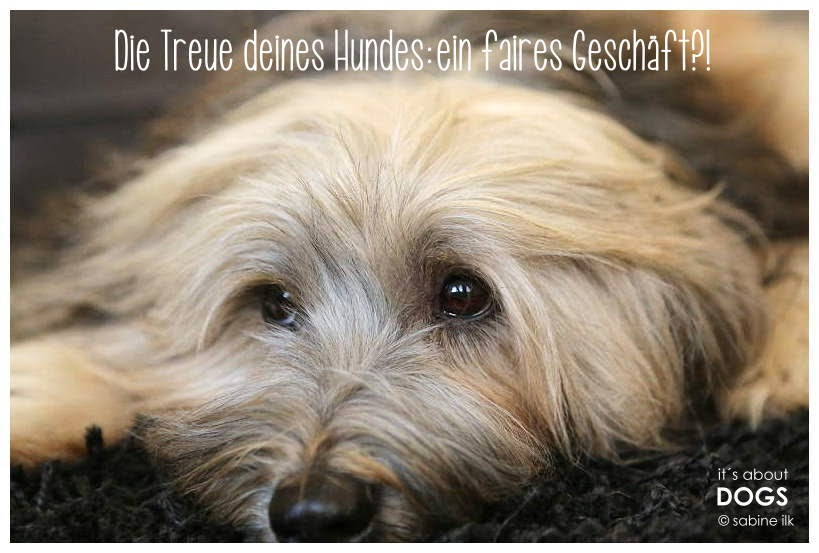 Die Treue deines Hundes: ein faires Geschäft?! ABOUT DOGS