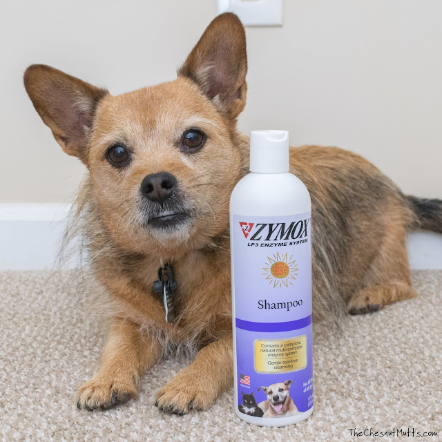 Zymox enzymatic dog shampoo for allergies