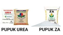 Berbagai jenis pupuk telah dikembangkan untuk memenuhi kebutuhan nutrisi tumbuhan Kabar Terbaru- MENGENAL PERBEDAAN PUPUK UREA DAN ZA