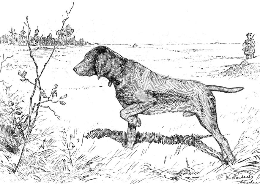 Dogs coloring pages 96