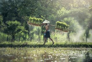 Ukm bidang pertanian