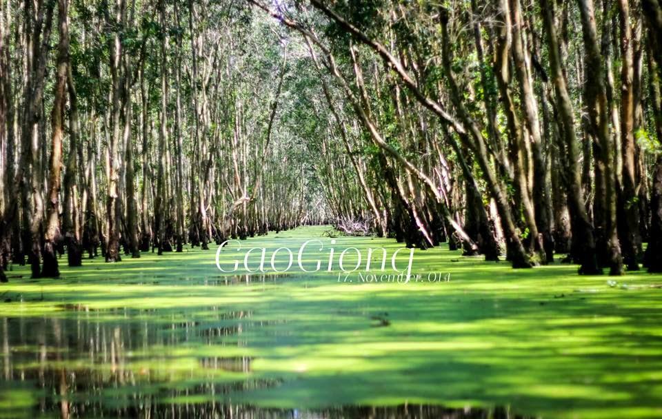 Khu Du Lịch Sinh Thái Gáo Giồng - Ảnh: Sưu tầm