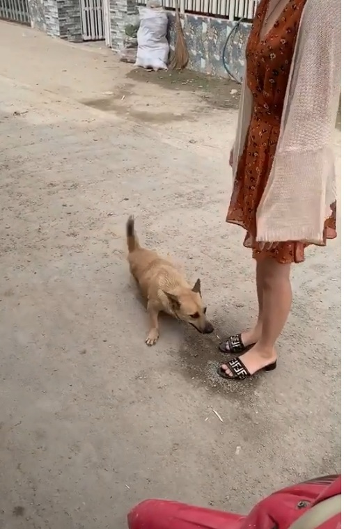 Mình cứ nghĩ chó nó sợ mắm tôm nhưng ngược lại chó thích mùi mắm tôm anh em ạ :v